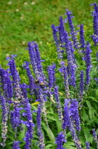 lavender-to-lift-your-mood