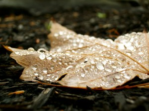 accidental_beauty_full_leaf_by_thefrogwhisperer-d5kg6a3