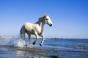 White-Horse-Running-On-the-beach-Wild-font-b-Animal-b-font-font-b-Nature-b
